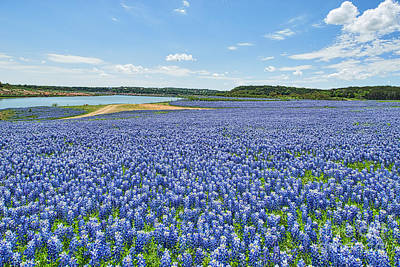 Wildflowers Photograph - Endless Bluebonnets by Tod and Cynthia Grubbs
