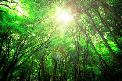 Photograph - Endless Green Forest Of Dreams by John Williams