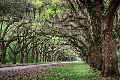Photograph - Endless Oaks by James Woody