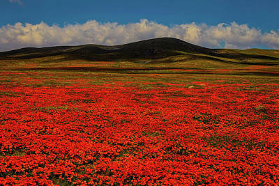 Endless Photograph - Endless Poppy Field by Garry Gay