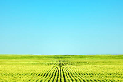 Endless Photograph - Endless Rows Of Wheat by Todd Klassy