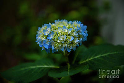 Photograph - Endless Summer Blue, Green And Yellow by Dale Powell