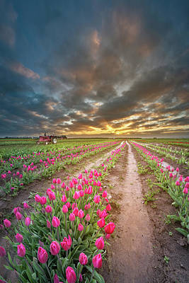 Photograph - Endless Tulip Field by William Lee