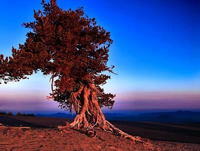 Whitebark Pines Photograph - Endurance by Laura Ragland