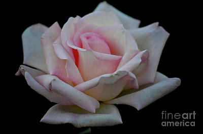 Photograph - Enduring Grace by Deb Halloran