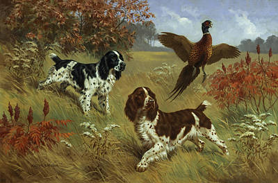 Animal Themes Photograph - Energetic English Springer Spaniels by Walter A. Weber