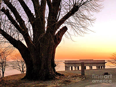 Photograph - Engagement Tree by Janice Drew