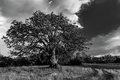 Engellman Oak Palomar Black And White Art Print