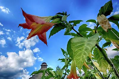 Photograph - Engelstrompete Brugmansia by Eva-Maria Di Bella