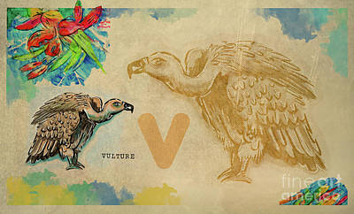 Animals Drawings - English alphabet , Vulture by Ariadna De Raadt