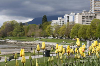 Photograph - English Bay by Wilko Van de Kamp