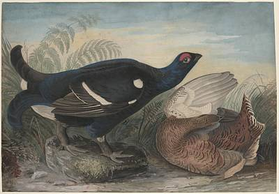 Wings Drawing - English Black Cocks by Dreyer Wildlife Print Collections