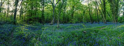 Photograph - English Bluebell Wood by Jacek Wojnarowski