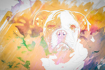 Watercolor Pet Portraits Photograph - English Bulldog Wc by Joye Ardyn Durham