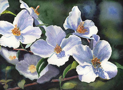 Painting - English Dogwood by Kathy Nesseth