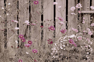 Photograph - English Garden In Pink And Gray by Susan Maxwell Schmidt