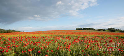 Photograph - English Poppy Field by David Birchall