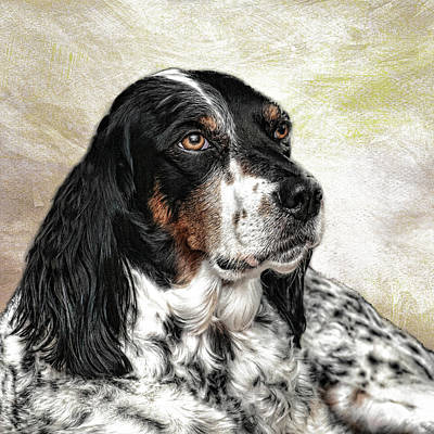 Photograph - English Setter by Phyllis Taylor