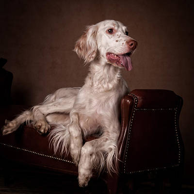 Portrait Painting - English Setter... by Tanya Kozlovsky