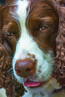 Cute Dog Digital Art - English Springer Spaniel 2 - Paint by Steve Harrington