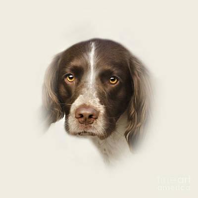 Purebred Digital Art - English Springer Spaniel  by Linsey Williams