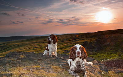 Digital Art - English Springer Spaniel by Maye Loeser