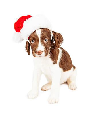 English Springer Spaniel Santa Puppy Art Print by Susan Schmitz