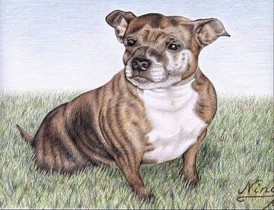 English Staffordshire Terrier Art Print by Nicole Zeug