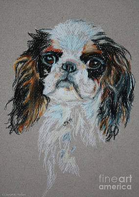 Pastel - English Toy Spaniel by Susan Herber