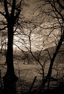 Photograph - English Trees by Scott Sawyer