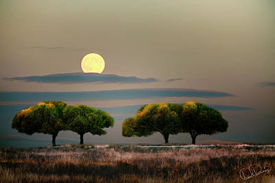 Photograph - Composite Of Trees And Moon by Dee Browning