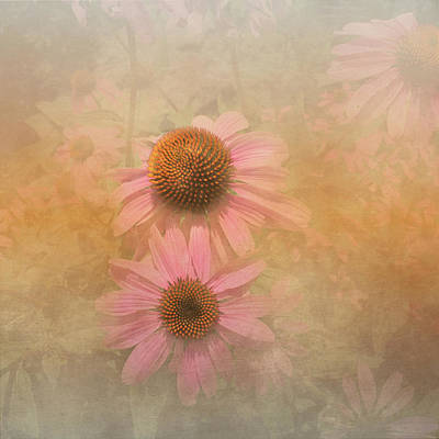 Photograph - Enhanced Conehead Daisy by Arlene Carmel