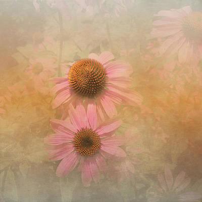 Photograph - Enhanced Conehead Daisy by Arlene Carmel