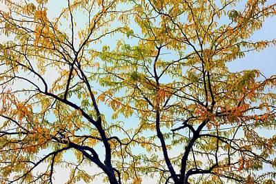 Photograph - Enhanced Fall Tree by Ellen Barron O'Reilly