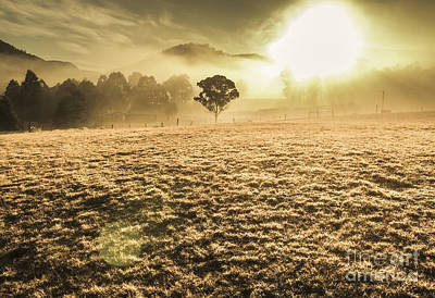 Enigmatic Photograph - Enigmatic Grassland by Jorgo Photography - Wall Art Gallery
