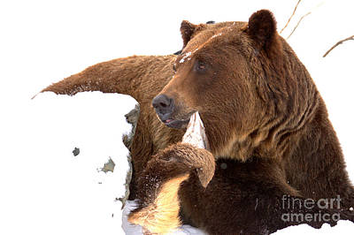 Photograph - Enjoying A Furry Snack by Adam Jewell