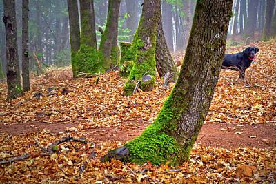Photograph - Enjoying The Forest Of Oak Run by Joyce Dickens