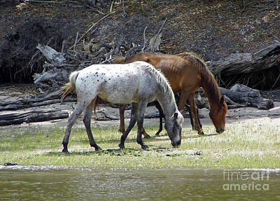 Photograph - Enjoying The Marsh Grass by D Hackett