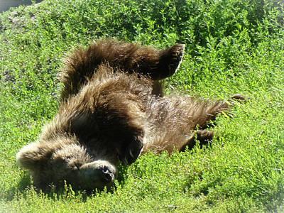 Bear Photograph - Enjoying The Sun by Dora Miller