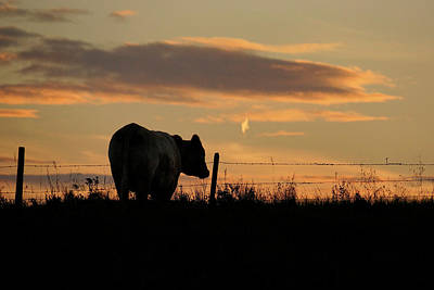 Photograph - Enjoying The Sunset by Inge Riis McDonald