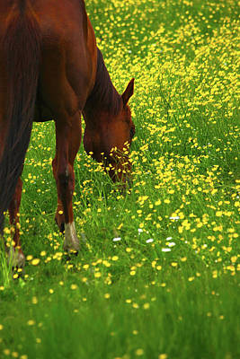Horsey Photograph - Enjoying The Wildflowers by Karol Livote