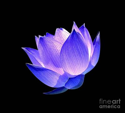 Blue Flowers Photograph - Enlightened by Jacky Gerritsen