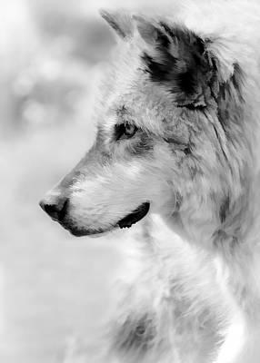 Photograph - Enlightened Wolf Bw by Athena Mckinzie