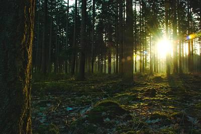 Natuur Photograph - Enlightment by Rene Van Rijssen