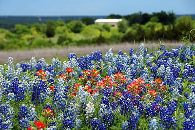 Photograph - Texas Wildflowers by Debi Demetrion