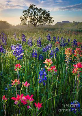 Photograph - Ennis Morning by Inge Johnsson