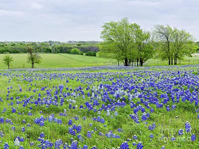 Photograph - Ennis, Texas by Cathy Alba