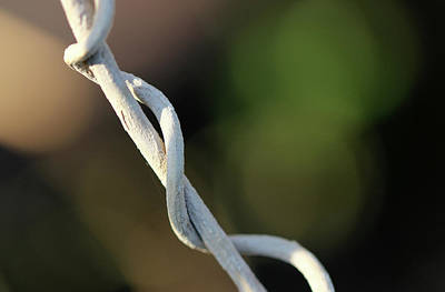 Photograph - Entangled by Prakash Ghai