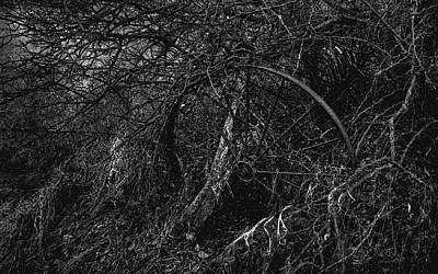 Photograph - Entangled Reclamation by Jim Vance