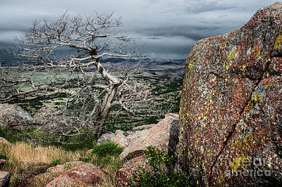 Photograph - Entangled Tree On Mt. Scott by Tamyra Ayles